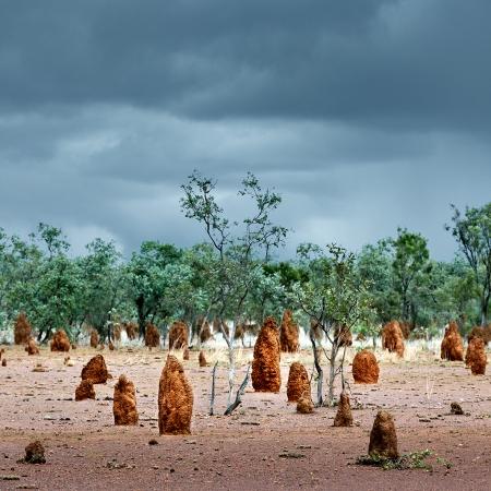 Termite Mounds 2, Central Australia