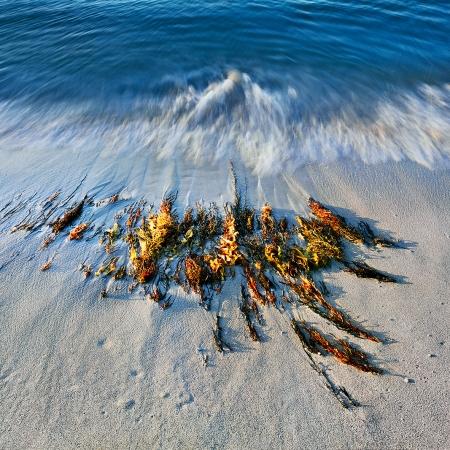 Wave Motion 1, Injidup Beach