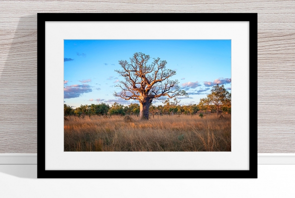 Jason Mazur - 'Boab Tree, Kimberley 032' Black Frame
