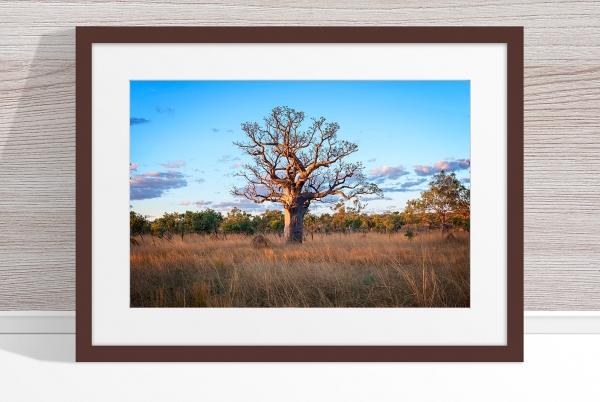 Jason Mazur - 'Boab Tree, Kimberley 032' Dark Wood Frame