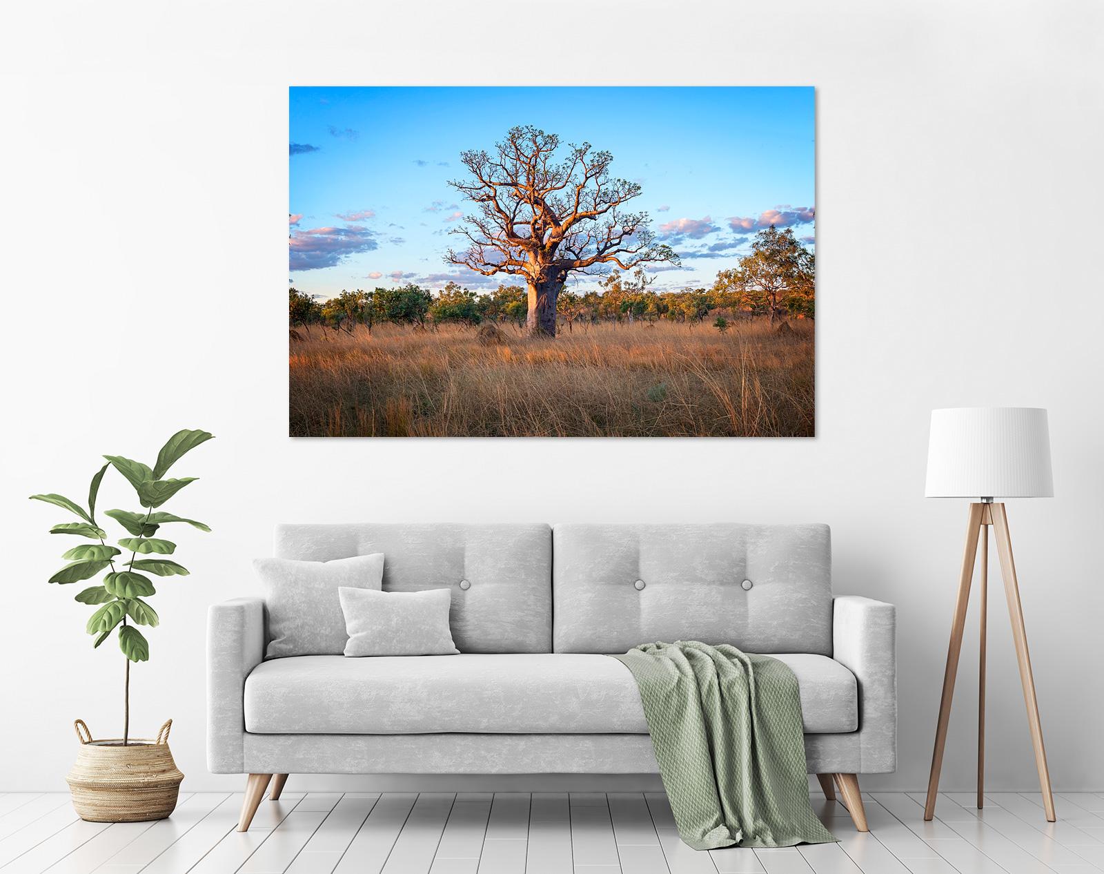 Jason Mazur - 'Boab Tree, Kimberley 032' in a room