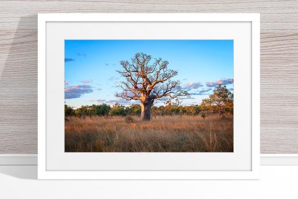 Jason Mazur - 'Boab Tree, Kimberley 032' White Frame