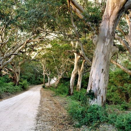 Boranup Forest Drive