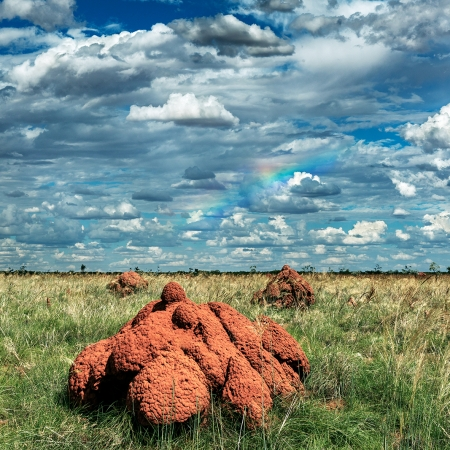 Termite-Mounds-Derby
