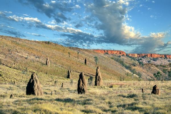 Termite Mounds near Halls Creek WA