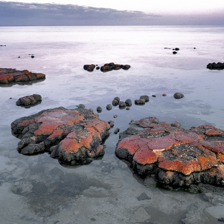 Stromatolites, Hamelin Pool, Shark Bay