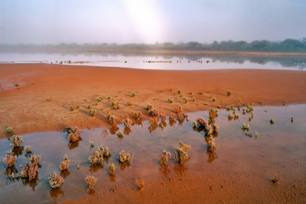 Misty Morning near Cue, Western Australia