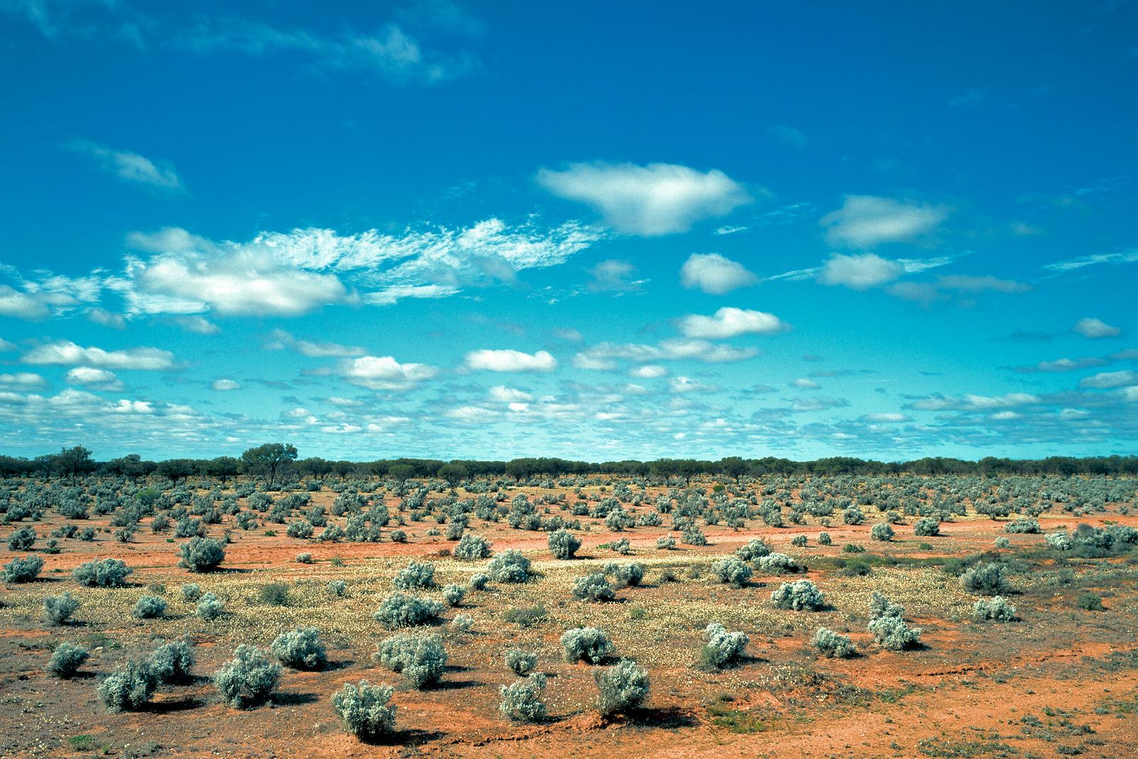 Saltbush Landscape, Mid West