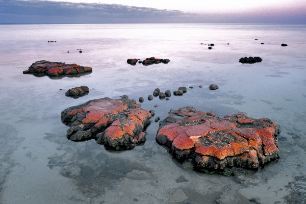 Stromatolites, Hamelin Pool, Shark Bay