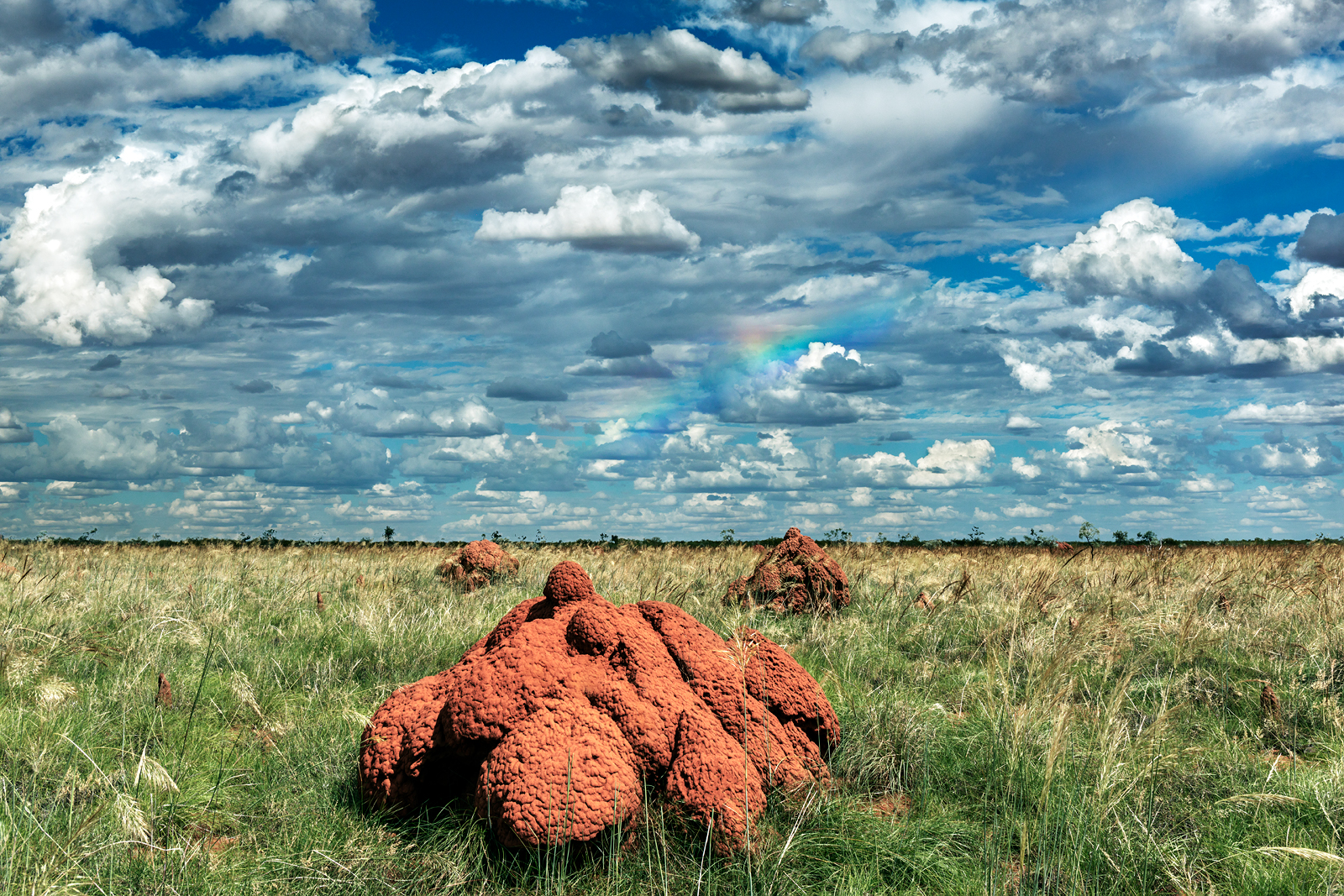 Termite Mounds near Derby WA