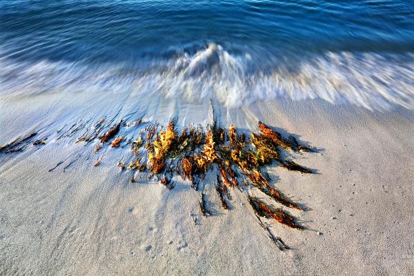 Wave Motion #1, Injidup Beach