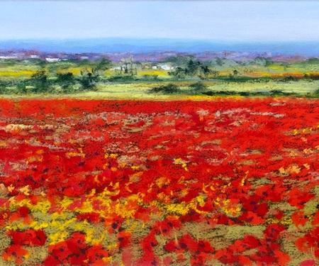 Flanders Poppy Field